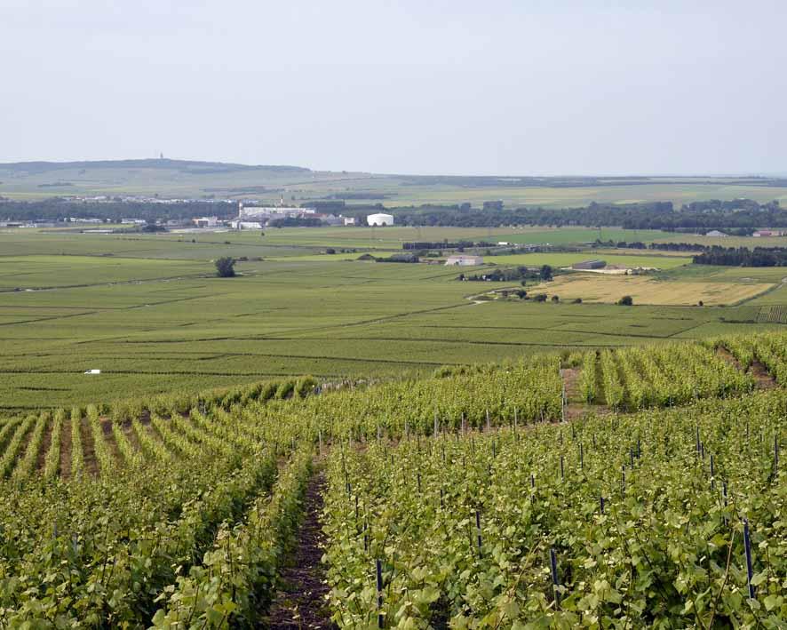 Verzenay, la plaine à l'Est de Reims