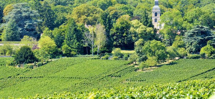 Forêt Hautvillers ©PNRMR