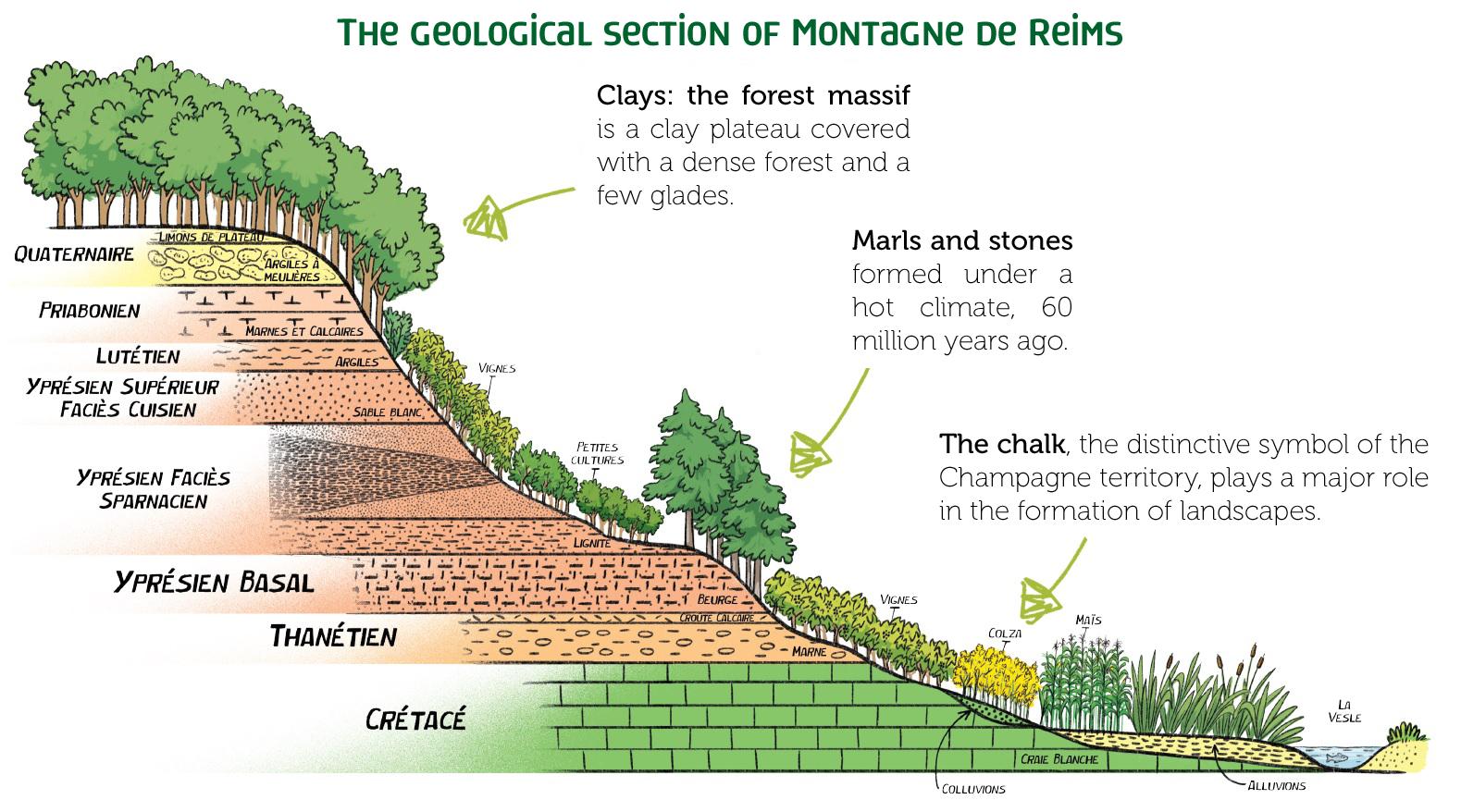 Geological section ©Armelle DROUIN