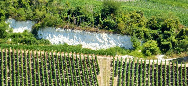 Falaise de craie en Montagne de Reims ©PNRMR